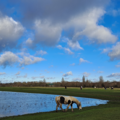 Flooded Port Meadow