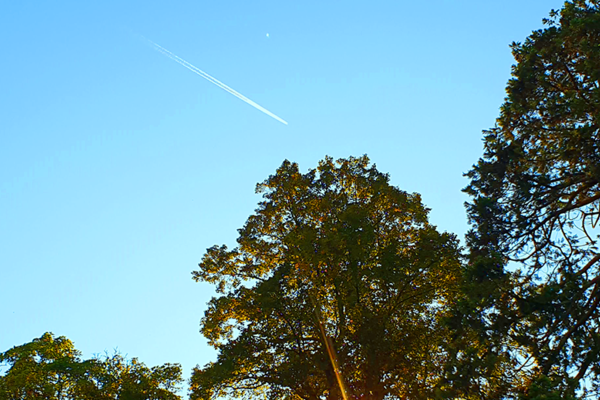 Clear sky and trees